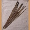 Pheasant feather, long